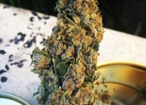 washington-dc-dops-return-weed-to-man-marijuana