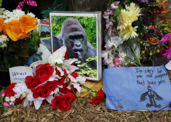 tributes-harambe-gorilla