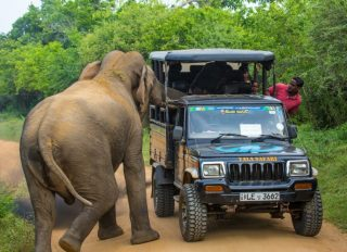Holidaymakers had a close call when a curious elephant poked its head into their safari jeep to look for food and nearly tipped the vehicle over.