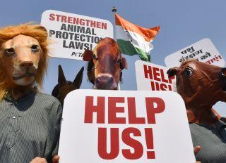 PETA Campaign For Animal Protection
