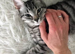 a persons hand stroking over a little kitten, laying on a white fur