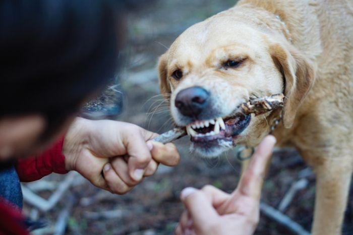 Me and my labrador retriever