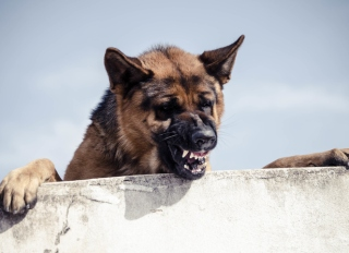 Close-Up Of Dog Snarling Against Sky