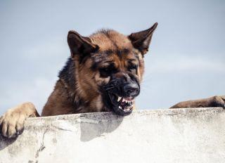 Close-Up Of Dog Snarling Against Sky