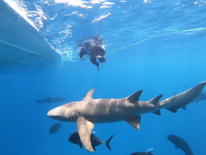 Full Length Of Man Scuba Diving Undersea