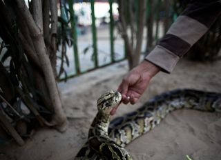 Rafah zoo a welcome refuge from daily political life in Gaza