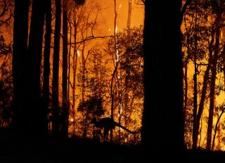 Emergency Warning Issued For Hawkesbury As Bushfire Nears Sydney Outskirts