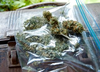 plastic bag of assortment of marijuana on lunch box
