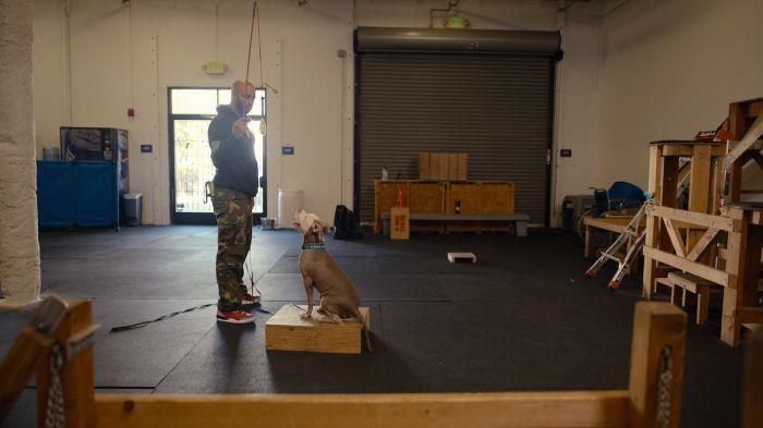 "Jasalah ""Jas"" Leverette of K-9 Solutions stars on ""Canine Intervention"" on Netflix"